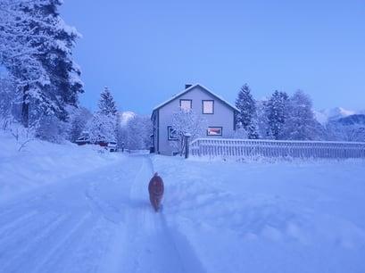 Isfjorden-katten-rusten